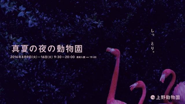 Cowwo1JVYAEq4WF (640x359).jpg